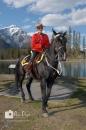 Mountie Banff Horse_pamdoylephoto w