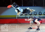 Shrine Circus dog act