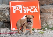 Bow Valley SPCA 2013 calendar