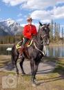 RCMP Mountie on horse photo