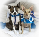 Dogs dressed in room_pamdoyle w
